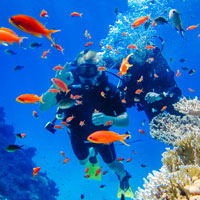 Egypt has some of the best diving in the world