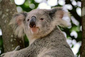 Australia retains tourism accolade