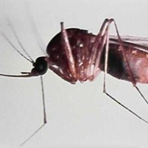 Britain sees fatal malaria increase