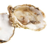 14 people fell ill from eating oysters in New Orleans last month