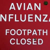 New strain: As China braces itself for a fresh outbreak, Britain still remembers bird flu signs such as this one going up at the end of 2007