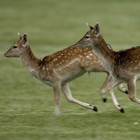 Rhode Island is seeing an increase in the number of cases of Babesiosis, an infection caused by a parasite transmitted by deer ticks