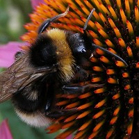 A bumblebee sting is classed as level two on a researcher's scale
