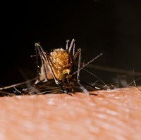 Scientists have claimed there is no hard evidence backing claims ultrasound can repel mosquitoes