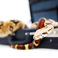A poll has revealed that a snake was one of the more surprising items that hotel guests have left behind.