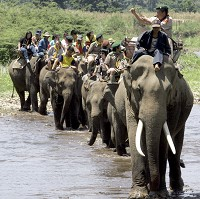 Elephant treks are popular in Thailand, but one Swedish tourist died during such an expedition when she was trampled on