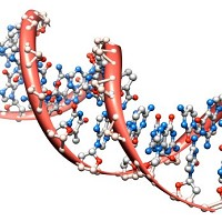 DNA mutations have been categorised in what is a significant step forward in scientific understanding of cancer
