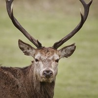 A deer wandered onto an airfield, according to reports