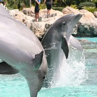 Around 200 children recently experienced swimming with dolphins on a charity holiday