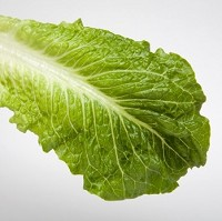 A recent outbreak of E.coli in Canada was linked to the consumption of romaine lettuce