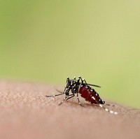 Mosquito protection is a factor to consider before travelling abroad
