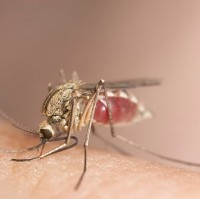 Scientists have found the malaria switch