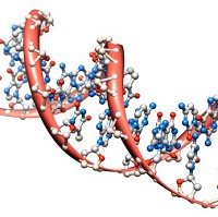 The 'pseudogene' contains similar DNA material to the proten PTEN