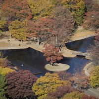 Yoyogi Park: one of Tokyo's most popular parks has seen some visitors contract dengue fever