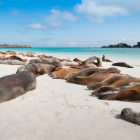 Climate change will endanger the Galapagos Islands, scientists warn