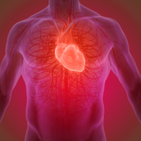 Heart failure occurs when the heart is too week to pump blood around the body